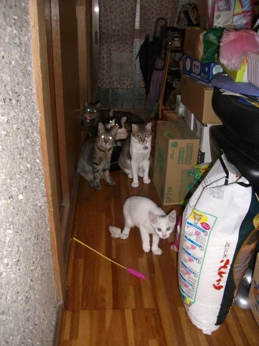 実家にもネコが増えました。.jpg