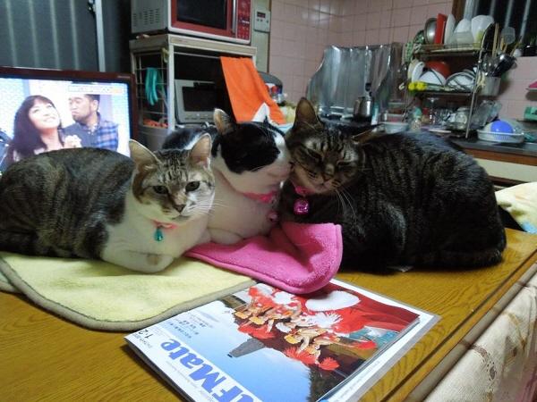 テーブルを占拠する猫たち.jpg
